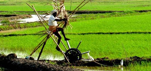 Kerala Farm Tourism